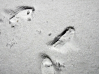 003 Esimene lumesadu Sindis. Foto: Urmas Saard