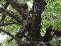 002 Hiiepuu Riinu Uduveres. Foto: erakogust