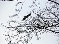 002 Linnuvaatlus Sindi linnas. Foto: Urmas Saard