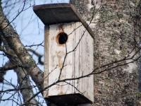 004 Linnuvaatlus Sindi linnas. Foto: Urmas Saard