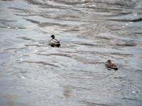 008 Linnuvaatlus Sindi linnas. Foto: Urmas Saard