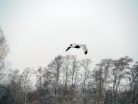009 Linnuvaatlus Sindi linnas. Foto: Urmas Saard