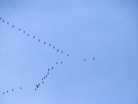 014 Linnuvaatlus Sindi linnas. Foto: Urmas Saard