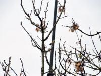 015 Linnuvaatlus Sindi linnas. Foto: Urmas Saard