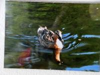 002 Mikk Rätsepa fotonäituse avamine Sindis. Foto: Urmas Saard