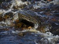 005 Pärnu jõgi Sindi silla kohal pärast paisu mahavõtmist. Foto: Urmas Saard