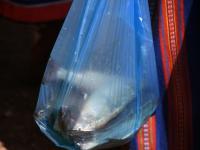 022 RäimeFest Lao kalasadamas. Foto: Urmas Saard