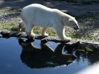 004 Tallinna loomaaia 80. sünnipäev. Foto: Urmas Saard