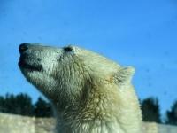 005 Tallinna loomaaia 80. sünnipäev. Foto: Urmas Saard