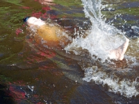 012 Ujuma õpetamine Sindis. Foto: Urmas Saard