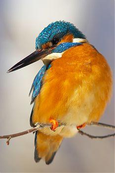 Foto: Eesti Ornitoloogiaühing