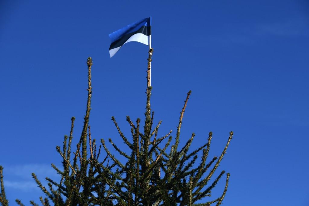 Eesti lipp kuuse ladvas Foto Urmas Saard