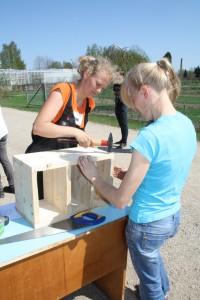 Kaidi Kask ja Leegi Põder ehitamas putukahotelli. Foto: SA Innove
