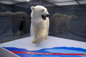 Jääkaru Jääaja Keskuse näidiste seas Foto Urmas Saard