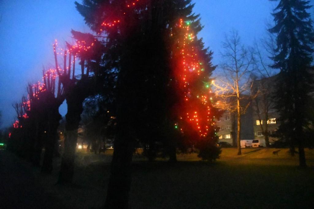 Jõuluaegne Johann Christoph Wöhrmanni puiestee Sindis Foto Urmas Saard