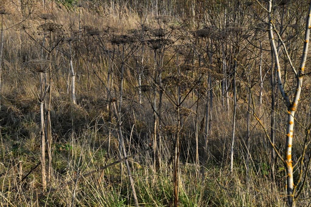 Karuputked Pihkva oblastis novembri alguses. Foto Urmas Saard