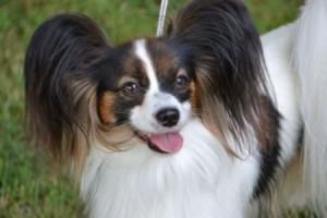 Kreisilinnapäeval 14 juulil kell 11 toimuvad Paide kultuurikeskuse esisel platsil Paide kauneima koera valimised. See on mitteametlik meelelahutuslik koertenäitus, kus võivad osaleda kõik segaverelised koerad ja tõukoerad, kes on marutaudi vastu vaktsineeritud.