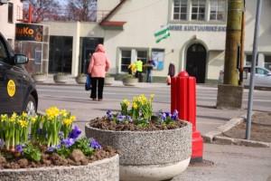 Kevadlilled Nõmme keskuses.