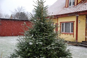 Lumesadu koduõuel Foto Urmas Saard