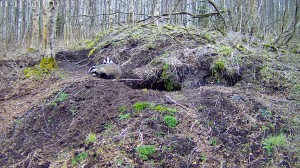 Mägrad looduskaameras. Foto: RMK