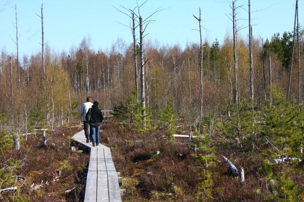 Pääsküla raba laudtee Foto Jukko Nooni