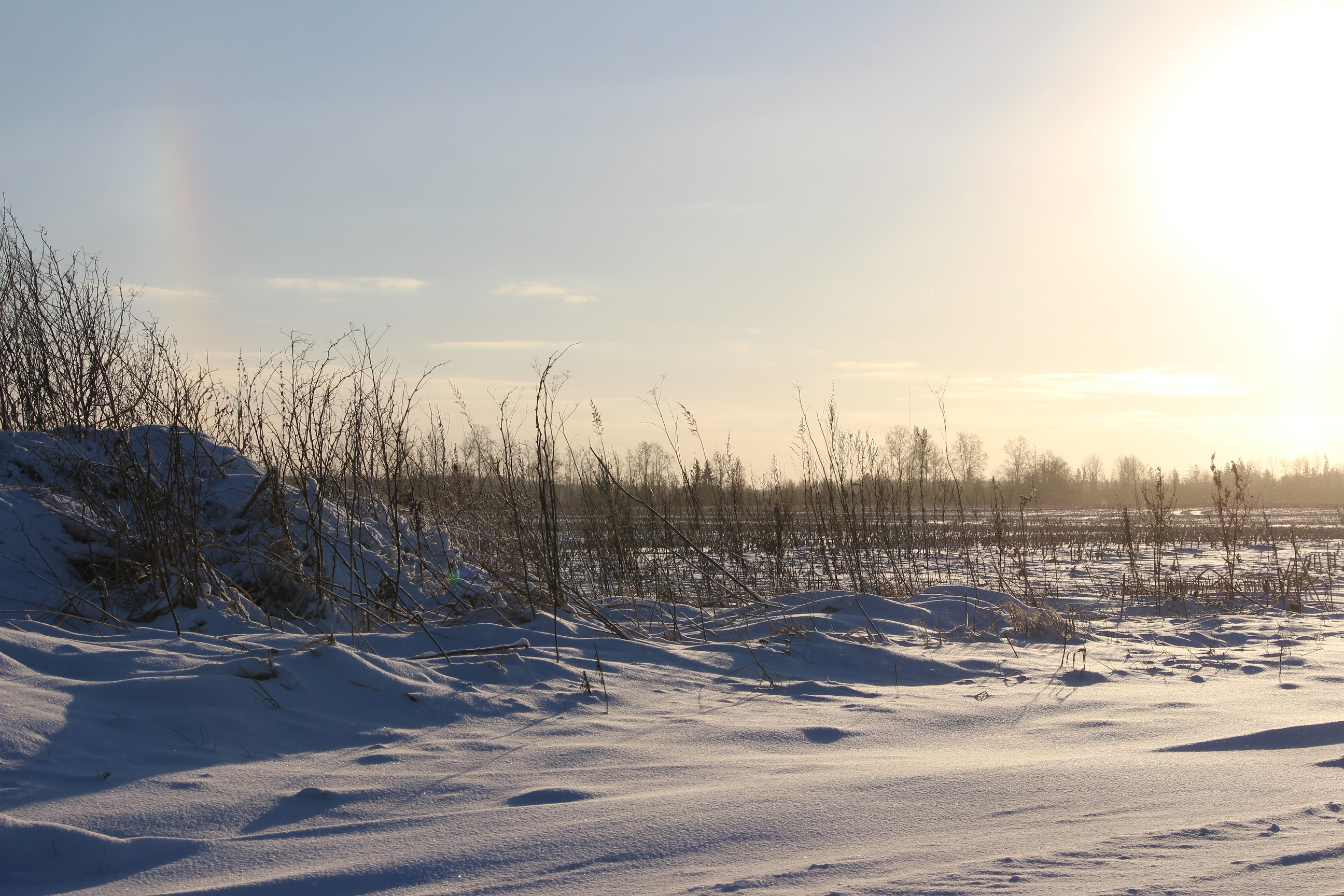 Päev on juba kukesammu võrra pikemaks läinud! Foto: Mikko Selg