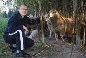 Egäl oinal om uma mihklipäiv: Rosenbergi Ivar ütles, et sändse, umbõs 40kilodsõ ja kooni aastadsõ oina liha om kõgõ parõmb. Foto: Harju Ülle