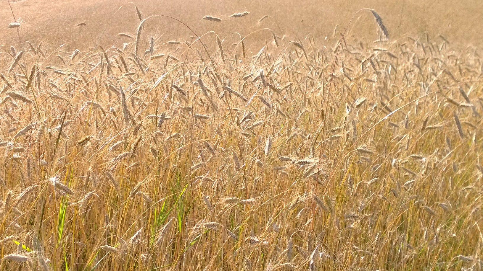 Suvelõpu kuldsed hetked. Foto: Kylauudis.ee
