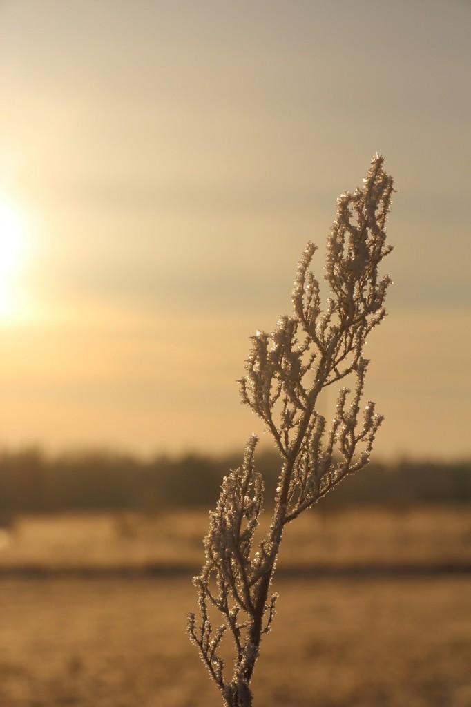 Taliharjapäev on ilusalt karge. Foto: Mikko Selg