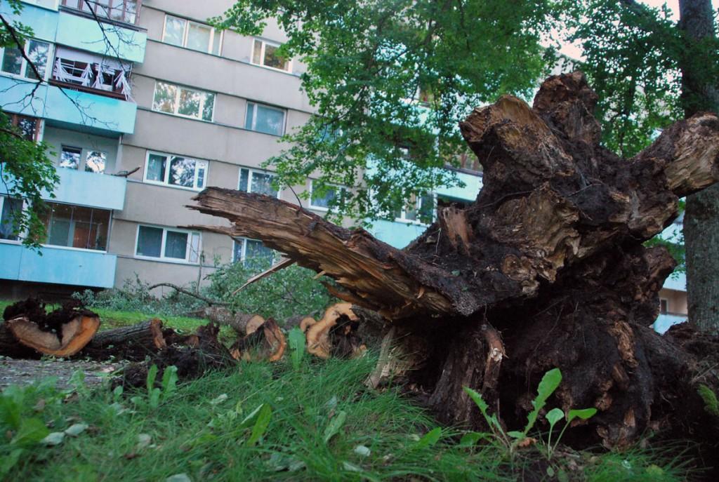 Tuulemurd Sindis Kooli tänaval Foto Urmas Saard