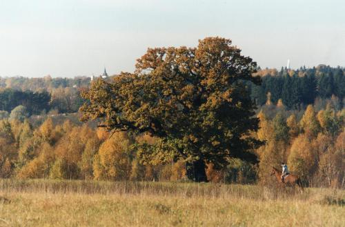 Viiralti tamm Viljandis. Allikas: puhkaeestis.ee