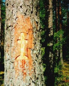 Ristipuu. Foto: www.folklore.ee