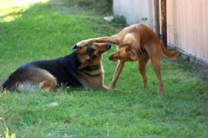 sobrad koerad